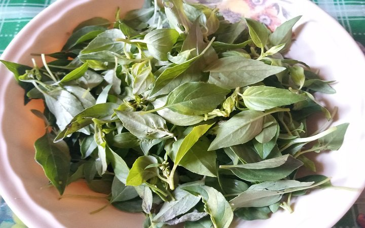 Picked scent leaves