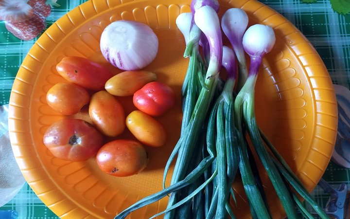 Tomatoes, onion bulb and spring onions